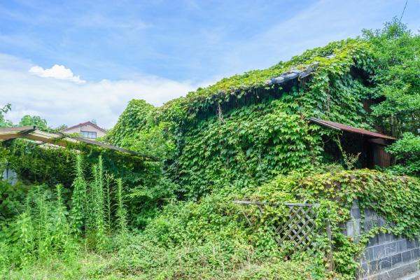 雑草などによる景観の悪化